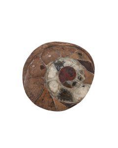 "Ammonite Atlas Mountains Morocco 2.5""- 3"" (1pc) NETT"