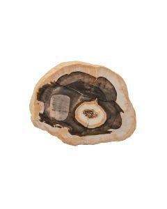"Petrified Wood Slice 1"" (Madagascar) (1pc)  NETT"