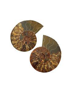 "Ammonite Madagascar 5-6"" (1 Pair) NETT"