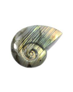 "Labradorite Ammonite 3-3.5"" (1 Piece) NETT"