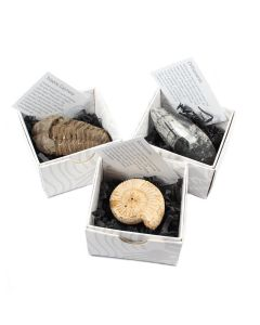 Mixed Fossil Gift Boxed with ID Card (9 Piece) NETT