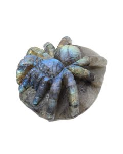 "Labradorite Spider Carving (3x2.5x1.25"") (1 Piece) SPECIAL"