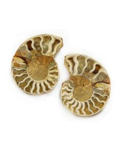 "1-2"" Ammonites Cut & Polished (Cleoniceras sp.) (1 Pair)"