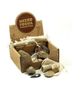Mining Mike's Fossil Collection Retail Box (25pcs) NETT