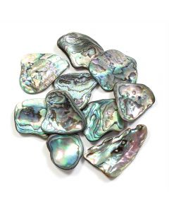 Abalone Polished Shell 20-30mm (10pcs)  (WAS £0.8 NOW £0.4)NETT