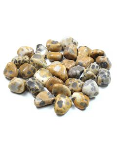 Cheetah Jasper (250g) 20-30mm Med Tumbled NETT