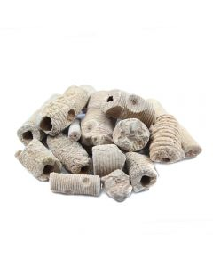 "Crinoid Stem 1-3"" Thick (250g) (Was £3.50 Now £1.75) NETT"